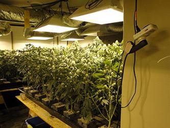Dea agents raid 15 grow houses in three california counties serving dope - Cannabis interior ...